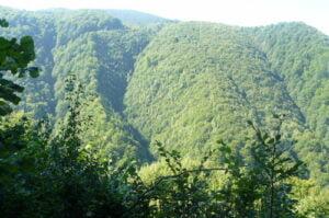 O firmă cu sediul în Braşov – al cincilea proprietar străin de păduri