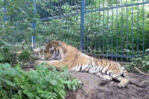 Ministerul Mediului mai are de plată aproape 9 milioane de lei pentru zoo