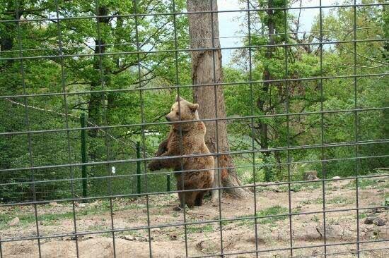 Încă trei urşi au ajuns la Rezervaţia Libearty din Zărneşti