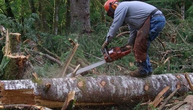 Orice caz suspect de tăiere de arbori poate fi semnalat începând de astăzi și online