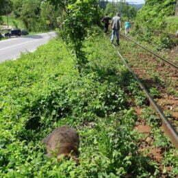 """Tot mai mulți ursuleți """"fugari"""" la Brașov. Un pui de urs și-a găsit sfârșitul sub roțile unui tren încercând să-și găsească un teritoriu"""