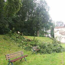 Copac doborât de vânt pe Aleea de sub Tâmpa. Regia Pădurilor face intervenții în tot orașul pentru reducerea riscurilor