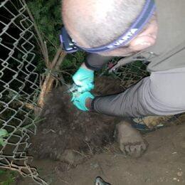 Pui de urs salvat pe strada Alexandru Petofi, din cartierul Șchei