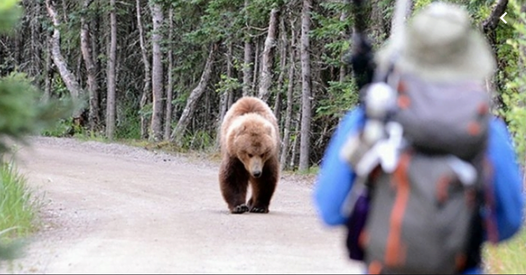 RO-ALERT Urs văzut la Pietrele lui Solomon. Evitați zona!