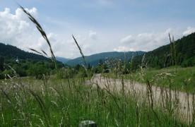 Drumul Valea Doftanei – Brădet, alternativă la DN 1, estimat la 480 milioane de lei