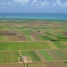 Cele mai ieftine terenuri arabile din România sunt în Transilvania. Un hectar se cumpără cu 3.000 – 6.000 de euro