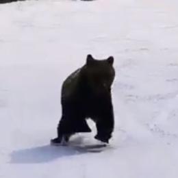 """Ministrul Mediului se gândește să pună garduri pe lângă pârtii, după ce în această iarnă mai mulți shiori au făcut """"întrecere"""" cu urșii la Predeal"""