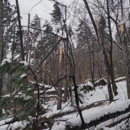 Traseele de pe Tâmpa, blocate de arborii doborâți de zăpada apoasă. Salvamontișii îi sfătuiesc pe amatorii de drumeții să nu se aventureze pe potecile de munte