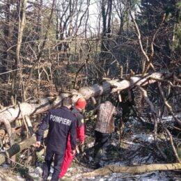 Salvamontiștii au început să elibereze traseele turistice de pe Tâmpa. Căderile masive de zăpadă din urmă cu două săptămâni  au pus la pământ mai mulți arbori