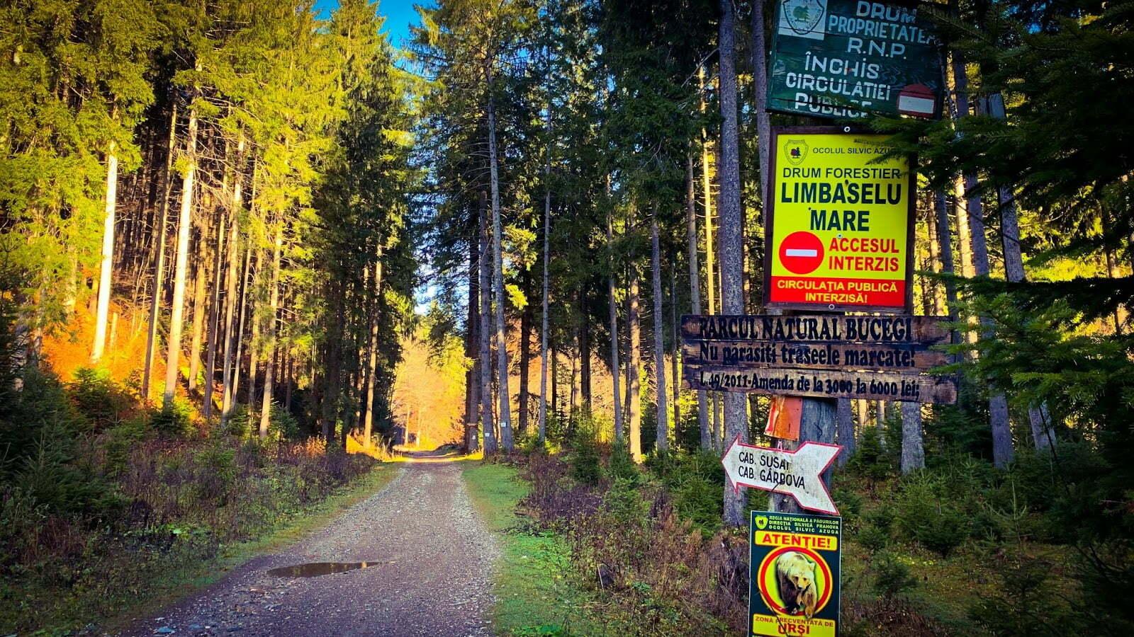 Un bărbat s-a dus să facă jogging prin pădure și nu s-a mai întors acasă. A fost găsit sfâșiat de un urs între Azuga și Predeal