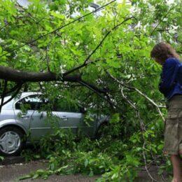 Un copac s-a prăbușit peste două mașini parcate în cartierul Răcădău