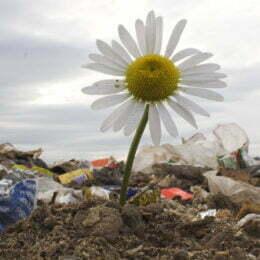 Biodegradabil vs. Compostabil: Ce ați alege când e vorba despre ambalajele alimentelor?