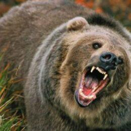 Hotărâre judecătorească: Statul român trebuie să plătească 15.000 de euro unei persoane care a fost atacată de urs