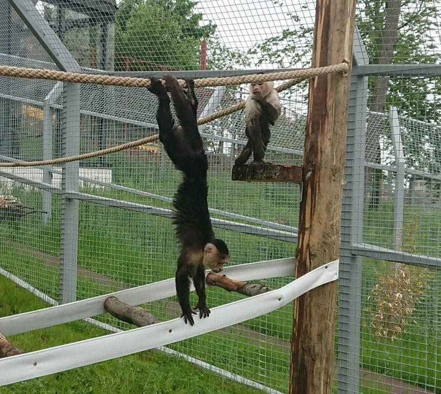 """Zoo Brașov, prima grădină din țară care oferă lecții deschise despre îngrijirea animalelor. De duminică, brașovenii care vizitează parcul pot afla lucruri inedite despre """"locatarii"""" acestuia direct de la îngrijitori"""