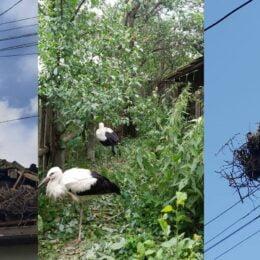 Cuibul unei berze a căzut peste acoperișul unei case din Breaza, distrugându-l în totalitate. Autoritățile nu vor să despăgubească proprietarul